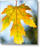The Maple Leaf Metal Print