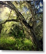 The Mighty Oaks Of Garland Ranch Park 1 Metal Print