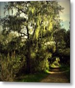 The Mighty Oaks Of Garland Ranch Park 2 Metal Print