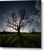 The Mighty Tree Metal Print