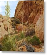 The Mighty Yucca Metal Print