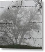 The Mist -- Oak Tree Behind Barbed Wire On Mt. Hamilton, California Metal Print