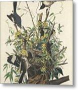 The Mockingbird Metal Print