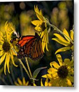 The Monarch And The Sunflower Metal Print