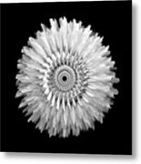 The Monochromatic Mandala Of Rose Metal Print by Jacqueline Migell