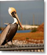 The Most Beautiful Pelican Metal Print
