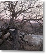The Mother Tree One Metal Print