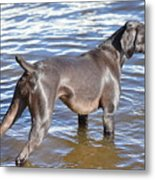 The Muddy Mississippi Metal Print