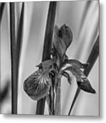 The Mystery Of Spring 2 Bw Metal Print