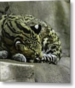 The Napping Rock Metal Print