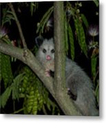 The Night Visitor Metal Print