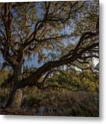 The Oak By The Side Of The Road Metal Print