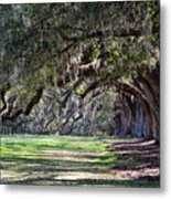 The Oaks At Boone Hall Metal Print