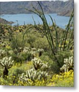 The Ocotillo View Metal Print