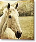 The Old Grey Mare Metal Print by Meirion Matthias