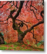 The Old Japanese Maple Tree In Autumn Metal Print