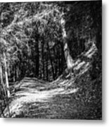 The Old Logging Road Metal Print