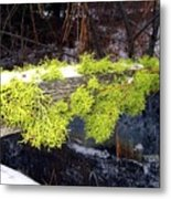 The Old Mossy Flume Metal Print