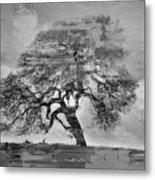 The Old Oak Tree Standing Alone  Metal Print