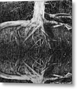 The Old Tree Metal Print