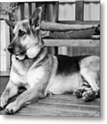 The Old Watch Dog Metal Print