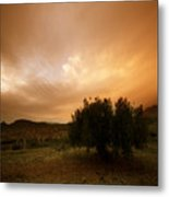 The Olive Tree Metal Print