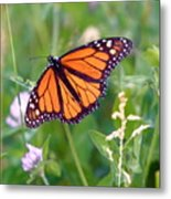 The Orange Butterfly Metal Print