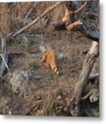 The Orange Iguana Metal Print