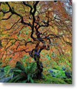The Other Japanese Maple Tree In Autumn Metal Print