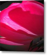 The Oval Rose Metal Print