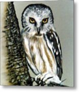 The Owl Heres looking at you Metal Print