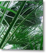 The Palm House Kew England Metal Print