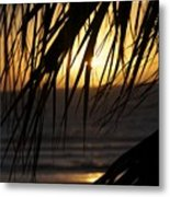 The Palm Tree In The Sunset Metal Print by Danielle Allard