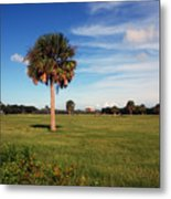 The Palmetto Tree Metal Print