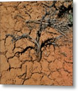 The Parched Earth Metal Print