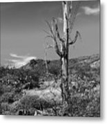 The Past Is Present Metal Print