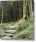 The Path Leading Up To  Metal Print