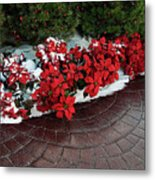 The Path To Christmas - Poinsettias, Trees, Snow, And Walkway Metal Print