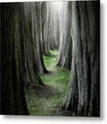 The Pathway Metal Print
