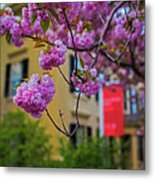 The Peabody Essex Museum At Spring Salem Ma Metal Print