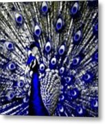 The Peacock Fan Metal Print