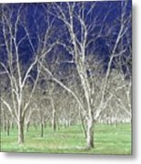 The Pecan Grove Metal Print