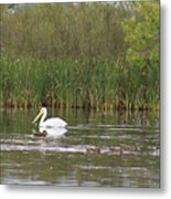 The Pelican And The Ducklings Metal Print