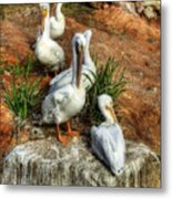 The Pelican Clan Metal Print