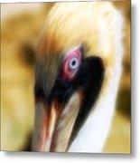 The Pelican Look Metal Print