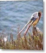 The Pelican  Metal Print