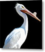 The Pelican  Metal Print