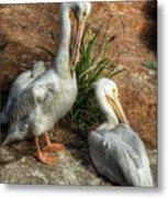 The Pelicans Metal Print