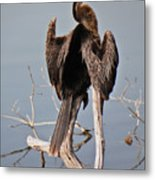 The Perch In The Pond Metal Print