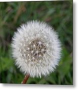 The Perfect Dandelion Metal Print